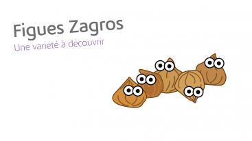 Figues zagros